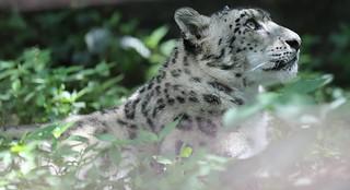 Mimi-Tama Zoo