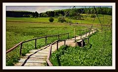 GERMANY, Schwäb.Alb , Schopfloch (Moor), Schwellenweg ,  76256/10184 (roba66) Tags: wiesen fields meadow schwellenweg schopfloch moor alb schwäbischealb germany deutschland reisen travel explore voyages roba66 badenwürttemberg landschaft landscape paisaje nature natur naturalezza bog sumpf steg torfmoor gras baum europa weg moorlandschaft