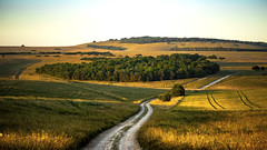 all the things I love about Wiltshire are here ... (HHH Honey) Tags: sony α7 ii sonyα7ii minolta minolta100200mm 118picturesin2018 6obsession salisburyplain wiltshire landscape golden goldenlight trees roads byway copses tracks lines crops sunlight shadows sidburycamp hillfort sidburyhill figheldeandown colours summer 6 obsession