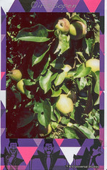 Alles begann mit dem Apfel # 2018002 # Fuji Neo90 instax mini color MIGNON - 7-7-2018 (íṛíṡíṡôṗĕñ ◎◉◎) Tags: fuji neo90 classic instax mini mignon farbe color irisisopen analog film sofortbild instant