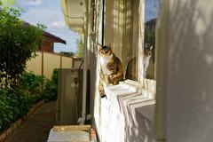 DSC03002 (flipswitch84) Tags: animals cats pets outdoors backyard sony sonya6300 sonyalpha sigma30mmf14dcdncsonye f14