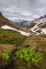 Jardín en las alturas (Pablo Moreno Moral) Tags: jardín alturas green verde spring primavera pirineos valle de tena