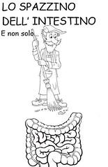 Lo Spazzino dell'INTESTINO (La Bottega Della Salute) Tags: plantago fibra intestino colon digestione colesterolo famo stomaco mucose obesità dietetico dieta dimagrante dimagraire stitichezza stipsi gastrico
