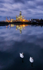 """Swans"" (Vest der ute) Tags: g7xm2 g7xll norway rogaland sea swans rig sky clouds reflections evening haugesund fav25 fav200"
