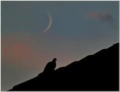 Night Bird (MaxUndFriedel) Tags: night bird roof sky heaven dawn clouds