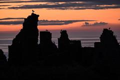 Dawn Patrol (Sunshinenshadows) Tags: seagulls castle ruin sea sky sunrise aberdeenshire scotland