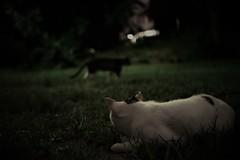 lurk in the dark (Sat Sue) Tags: gx7mk2 gx80 gx85 japan fukuoka night park