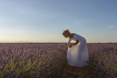 Recogiendo luz. (Amparo Hervella) Tags: brihuega guadalajara españa spain paisaje retrato flor lavanda cielo color naturaleza d7000 nikon nikond7000