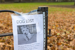 AFS-2017-08163 (Alex Segre) Tags: lost dog dogs pet pets animal animals notice notices sign signs poster posters appeal appeals uk england britain english british europe european nobody in a alexsegre