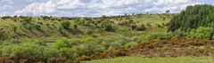 River Swincombe Valley (Diddlecome Dawcock) Tags: riverswincombe gobbetttinmine dartmoor dartmoornationalpark devon moor panorama gorse heather trees clouds summer pentax meyeroptikgörlitz quarry wildflowers england rock uk pentaxk30 granite landscape hexworthy nationalpark manuallens meyeroptikgörlitzoreston1850