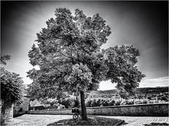The shining Tree... (Ody on the mount) Tags: anlässe bäume em5ii fototour gegenlicht himmel licht lichteinfall mzuiko918 omd olympus pflanzen stadtbaum tübingen bw light monochrome sw tree badenwürttemberg deutschland de