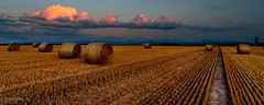 Soir d'été (Switzerland) (christian.rey) Tags: soir été summer paille champs fields campagne moissons blé agriculture broye fribourg fribourgoise paysage landscape coucher de soleil sunset sony a7r2 a7rii 24105 alpha