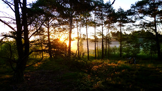 Foggy Dawn In Nature