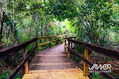 Jungle-Everglade-Hike (Jawor Photography) Tags: jaworphotography nature naturephotography natural landscape landscapephotography earth outdoors outside florida floridaeverglades everglades evergladesnationalpark swamp marsh water forest naturehike nationalpark naturelover summer tropical jungle hot humid hiking hike cypress bigcypressnationalpreserve cypressforest boardwalk tree trees plants plantlife plant flora