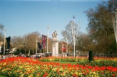 brighter (szmenazsófi) Tags: london smena smenasymbol analog analogue film 35mm england spring flowers floral bloom