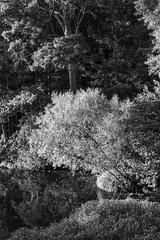 P1080627.jpg (martincutrone) Tags: monochrome pond