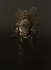 Band eyed horsefly - Tabanus bromius (markhortonphotography) Tags: surrey biting wildlife window pest horsefly eyes nature insect macro astrantiatabanusbromius bandeyedhorsefly diptera invertebrate