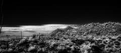 Saguaro Landscape (Richard Denney) Tags: saguaro nationalpark tucson arizona infrared hoyar72 landscape sky rock clouds desert