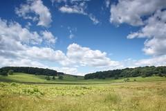 Up to the Folly (ianderry64) Tags: walk light sunshine beautiful picturesque bluesky clouds spinney copse wood tree oak bracken park bradgate hill oldjohn folly f22 horizon landscape