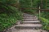 Le bonheur est dans le chemin... (Fabien VENEL) Tags: morzine frenchalps alpes alps hautesavoie forest forêt humide wet mountains montagnes nature