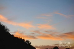 Orange hue (Aliceheartphoto) Tags: photography ohio sky trees nature naturephotography sunset sunsetphotography orange bluesky sony cybershot cincinnatiphotography cincinnati