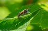 Boxelder (vernonbone) Tags: 2018 eastpoint february insects june lens macro march nikond3200 sigma105mm colors outside