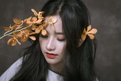 _MG_8532 (Yellow Autumn) Tags: