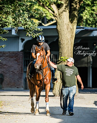 Chad Summers with Unnamed 2 Year Old (EASY GOER) Tags: horseracing equine thoroughbred sports belmontpark