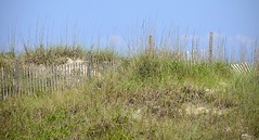 Fence with Sand Grasses (pjpink) Tags: capelookout lighthouse grounds beach atlantic water coast coastal eastcoast crystalcoast northcarolina nc carolina may 2018 spring pjpink 2catswithcameras