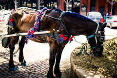 Festive (rg69olds) Tags: 07012018 35mm 5dmk4 canoneos5dmarkiv nebraska sigma35mmf14artdghsm canon oldmarket omaha sigma festive horse 35mmf14dghsm|a animal feeding