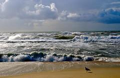 EL BAILE DE LAS OLAS (marthinotf) Tags: olas mar maratlantico portugal gaviota marpicada aveiro costasdeportugal maricos atlantico viento nubes turismodeportugal