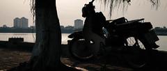 IMG_3595 (Somewherephotographer) Tags: cub nắng hồ tây