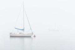 Parejas (Alfredo.Ruiz) Tags: canon eos6d niebla pantano bote alava