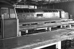 Capital Deltic UK  |  1981 (keithwilde152) Tags: br class55 deltic 55021 finsbury park depot london uk 1981 class31 building architecture walkways diesel locomotives blackandwhite monochrome winter