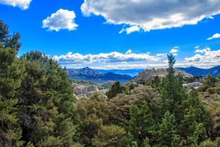 Pinyon Pine and City Of Rocks