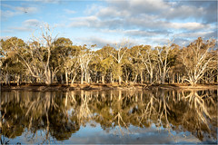 sunny afternoon .. (:: Blende 22 ::) Tags: australia australien southaustralia lagoon wetreflections trees clouds canoneos5dmarkiv ef1740mmf4lusm