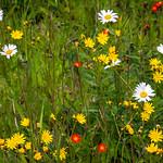 Wild Flower Close-Up thumbnail