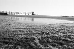 Frossen sø (LarsHolte) Tags: asahi pentax spotmatic spotmaticii spii smctakumar takumar 24mm f35 film 35mm analog analogue ilford fp4 ilfordfp4 100iso xtol bw blackandwhite monochrome filmphotography filmforever ishootfilm larsholte homeprocessing landscape kokkedal denmark danmark winter trees field