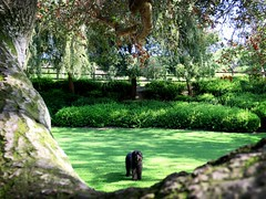 Let's Play Ball! (Bennilover) Tags: park aurorapark benni dog dogs labradoodle balls lacrosse tree liveoaktree