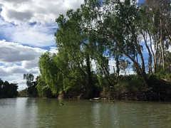 Arnhem Land, Northern Territory. (petebond_au) Tags: owners traditional australia saltwatercrocodiles northernterritory dreaming biodiversity crocodile estuarine alligatorriver arnhemland land arnhem