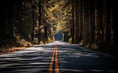 Road Trip (Rohit KC Photography) Tags: california roadtrip outdoor trees road vibrant edited ca highway1 beautiful shades leadingline canon canon5dmarkii canon24105mmf4l canonef24105mmf4l