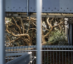 3 july 2018 - photo a day (slava eremin) Tags: 365 1day photoaday dailyphoto auckland nz newzealand tree branches industrial