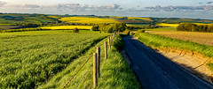 Road to Broadchalke, Wiltshire (cantdoworse) Tags: broadchalke wiltshire england salisbury countryside fields landscape canon 6d 70 300 road