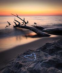 Ostseeliebe (stein.anthony) Tags: horizontezingst sonnenuntergang strand weststrand zingst fischlanddarszingst ostsee ostseeküste norddeutschland sundown baum tree entspannung entschleunigung