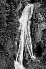 Tentacles of Water (Black & White)