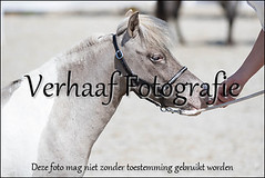 113A4497-BorderMaker (elienv1) Tags: