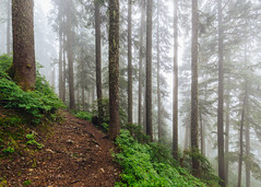 Forest Wandering (John Westrock) Tags: forest nature fog foggy trees path trail hiking snoqualmiepass washingtonstate pacificnorthwest canoneos5dmarkiii canonef1635mmf4lis