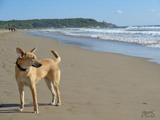 De passeig per la platja.