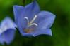 Iris (mdmove1962) Tags: abstrakt allemagne berlin bildstil blau bundesrepublikdeutschland dedeutschland deutschland europa europaeischeunion europe europeanunion europäischeunion farbe federalrepublicofgermany genre germany grün herkunft jahreszeit landschaftsfotografie move1962 move1962gmxnet macro makrofotografie maxliebermannvillaamwannsee michad natur objektfotografie pflanze sommer umwelt ursprung vermerk abstract blue color colour comment concept deutsch environment environmental european europäisch german green landscape landscapephotography location nature plant remark summer maxliebermann maxliebermannvilla wannsee