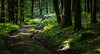 deerjump (johndifool) Tags: wood jump forest weg green holz reh deer wald 7dwf fauna